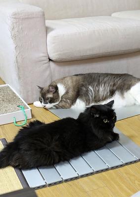 チビ猫との対面が延びた「越後屋とヒメ」
