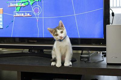 皆さんにお目見えした「チビ猫ミー」