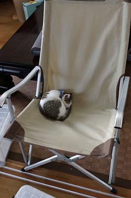 キャンプ椅子で寝るミー