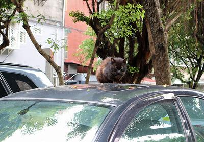 台北の野良猫