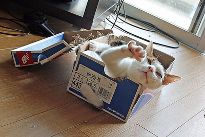 箱の中で変な演技中のチビミー
