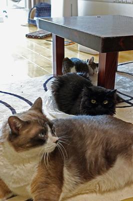 我が家の猫3匹が一枚に収まる珍しい写真