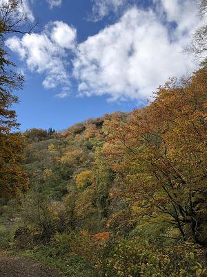 福井県大野市の「刈込池」への県道の紅葉