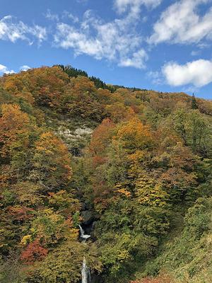 福井県大野市の「刈込池」への県道の紅葉と滝