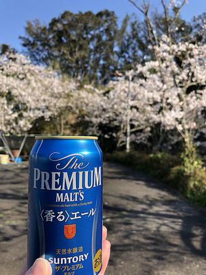 海山荘の駐車場でちょい花見
