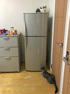 壊れたサブの冷蔵庫